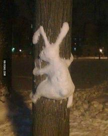 Snow bunny fail running